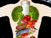 Желудок и кишечник